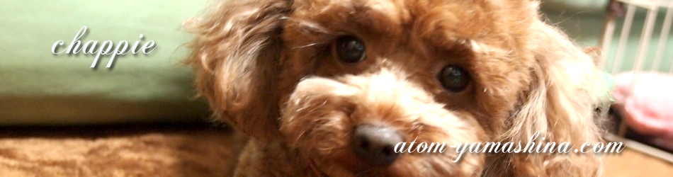 愛犬チャッピー